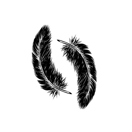 Vector hand drawn line art style feather for poster, banner, logo, icon. Fluffy feathers on transparent background in realistic style. Lightweight sketch illustration, for patterns, ink drawing.