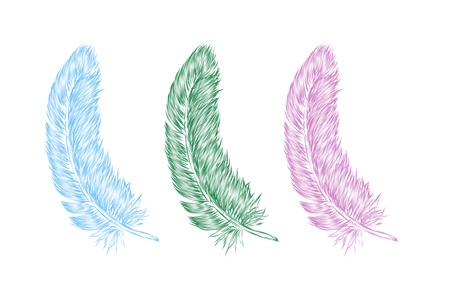 Vector hand drawn line art style feather for poster, banner, logo, icon. Set of colorful fluffy feathers on transparent background in realistic style. Lightweight sketch illustration, for patterns.  イラスト・ベクター素材