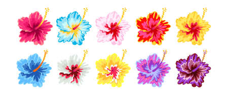 Beautiful Hibuscus flowers species in the world