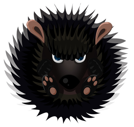 pampered: Hedgehog isolated on white. Vector cartoon illustration.