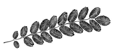 Decorative acacia leaf.