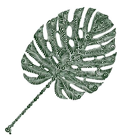 Plant leaf of Monstera. Illustration