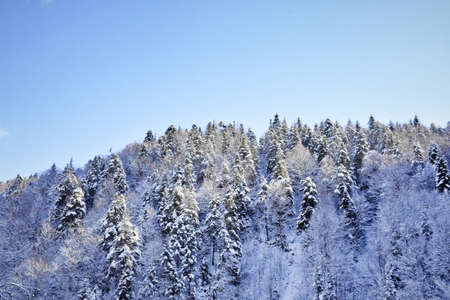 A winter scene, snowy hills covered with pine trees Banque d'images - 119808241