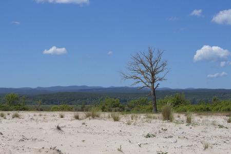 Leafless tree on the beach