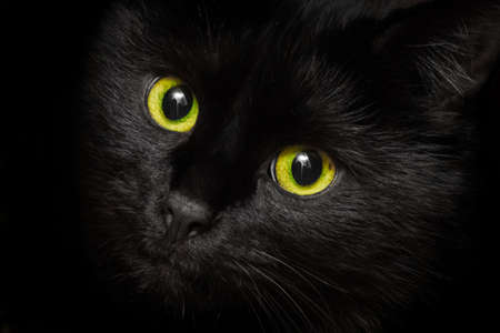 Yellow-green eyes of a black cat animal, close up.