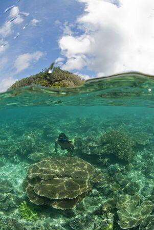 free diver: Free diver and over under shot, Raja Ampat, Indonesia