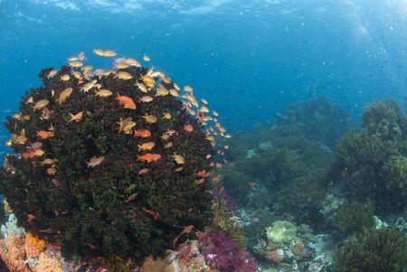 Colourful reef scene, Raja Ampat, Indonesia photo