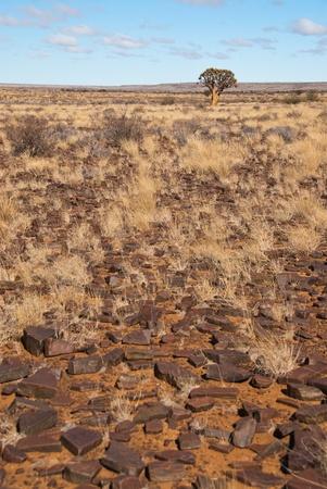 rsa: Lone tree in field Stock Photo