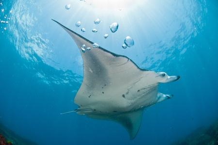 underbelly: A nuoto mantary lungo una scogliera, Zavora, Mozambico