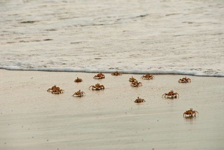 kwazulu natal: The view of crabs moving over the sand near the water, KwaZulu Natal, South Africa