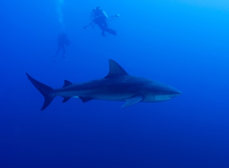 bull shark: The view of photographers  getting some shots of a bull shark, Pinnacles, Mozambique Stock Photo