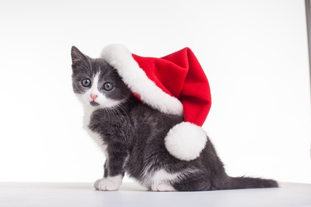 Christmas Kitty Stock Photo - 16839937