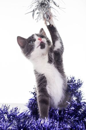 Tinsel Kitty Stock Photo - 16839940