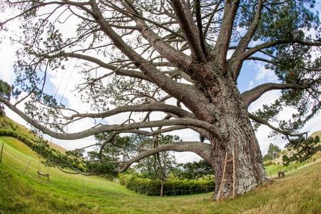storybook: Storybook Tree