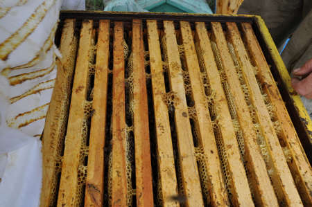 ambrosia: hives and sweetness honey of bees in the hive