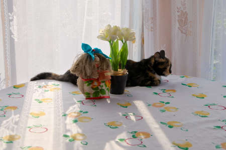 Cat at the window on the table photo