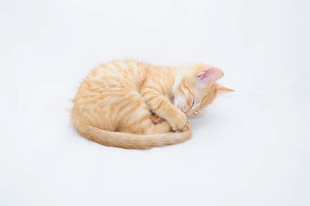 Kitten curled photo