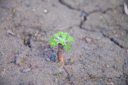 Young green sprout in dry soil, background photo
