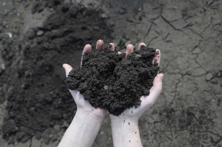 Soil in the open palm, dry soil on background photo