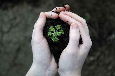Hand holding plant seed in  black soil, dark background photo