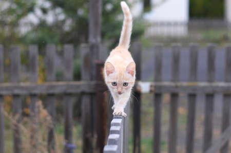 생강 고양이 나무 울타리에 걸어