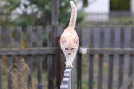 Ginger cat walking on a wooden fence Stock Photo