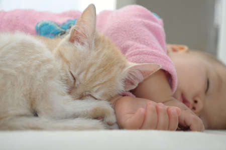 Baby and cat daytime  sleeping together  quite photo