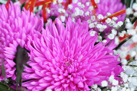nosegay: flowers of pink chrysanthemum blossoming  in bouquet