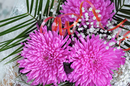Three flowers of pink chrysanthemum blossoming  in bouquet photo