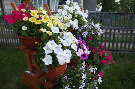 anthesis: stair decoration design with colored petunia flower garden