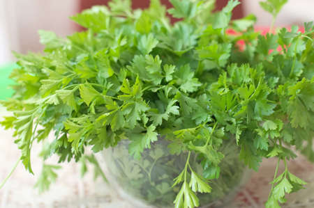 folliage: parsley fresh herb in the glass soup plate