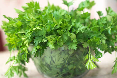 folliage: punch fresh green  herb on the table Stock Photo