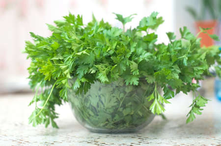 folliage: parsley fresh green  herb on the table