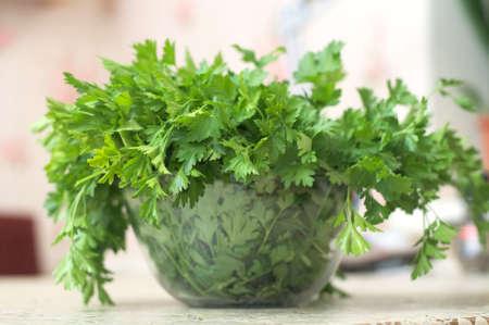 folliage: parsley fresh  herb on the table closeup