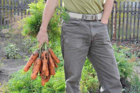 dungy: Farmer with carrot bunch on garden background