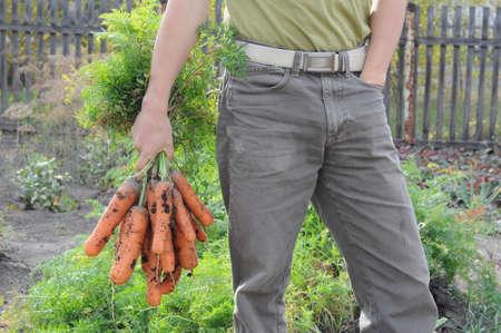 granger: Farmer with carrot bunch on garden background