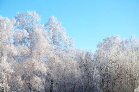 the silence of the world: Winter forest tundra landscape in frost rime with clean blue sky Stock Photo