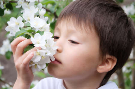 pleasantness: Caucasian boy smelling blossoming apple tree flowers at spring Stock Photo