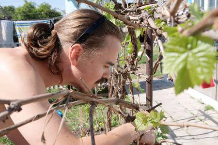 folliage: Young farmer harvesting and gardening grape vine