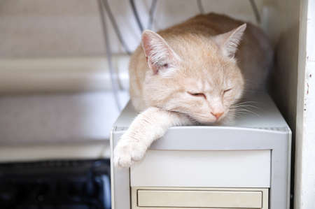 catling: ginger cat sleeping on computer under table warming himself