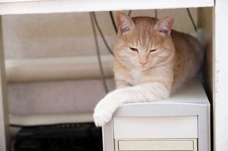 ginger cat: ginger cat lying on pc computer under table warming himself