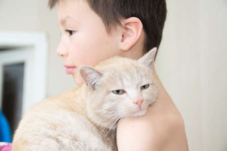 boy embracing with cat after waking up, favorite pet on child hands,Interactions between children and Cats Stock Photo