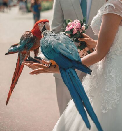 A man and a woman hold two blue and red macaws in their arms