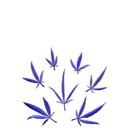 Pattern of different leaves of marijuana and hemp on a on white isolated background. Flat lay. Cannabis plant background 免版税图像