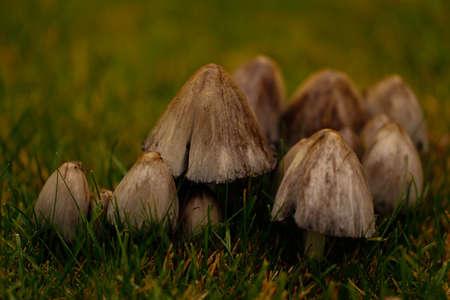 환경의 버섯은 매우 일반적이며 시각적 축제를 제공하지만 조심하십시오. 스톡 콘텐츠