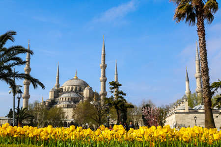 the historical city of Istanbul has a distinctive beauty of tulip time.