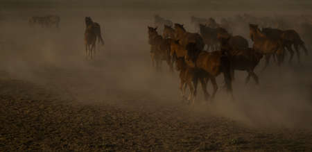 wild horse  running background. Stock Photo
