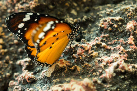 multicolored beautiful elegant butterfly monarch on stone