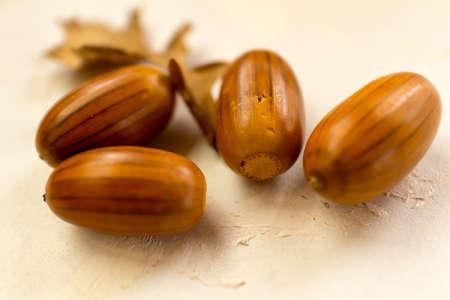 acorns and dry leaves on white background Zdjęcie Seryjne