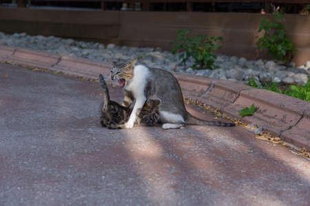 mother stray cat suckling her cub Standard-Bild